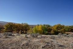 Kolory jesień kontrastują z polem wysuszona trawa i niebieskie niebo obraz royalty free