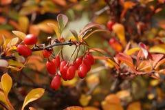 Kolory jesień Obrazy Royalty Free