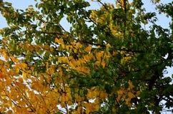Kolory jesień Fotografia Royalty Free
