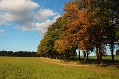 Kolory jesień Obraz Stock