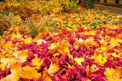 Kolory jesień Obrazy Stock