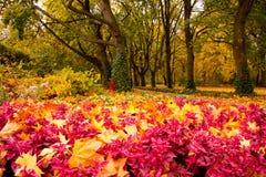 Kolory jesień Zdjęcia Royalty Free