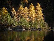 Kolory jesień Zdjęcie Royalty Free