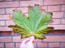 Kolory jesień Zdjęcia Stock