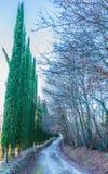 Kolory jesień w Tuscany Obraz Royalty Free
