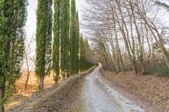 Kolory jesień w Tuscany Fotografia Royalty Free
