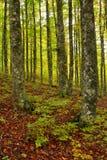 kolory jesieni Zdjęcie Royalty Free