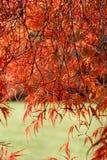 kolory jesieni Obraz Stock