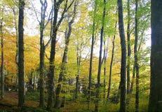 kolory jesieni Obrazy Stock