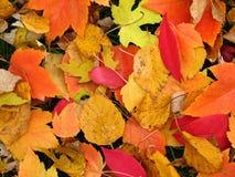 kolory jesieni Zdjęcia Stock