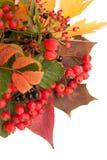 kolory jesieni Fotografia Royalty Free