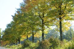 kolory jesieni Fotografia Stock