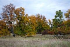 Kolory jesieni drzewa w Rosja zdjęcia royalty free
