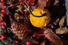 kolory jesieni tła Zdjęcia Royalty Free