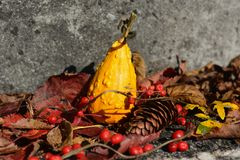 kolory jesieni tła Fotografia Stock