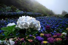 Kolory kwiaty Fotografia Royalty Free