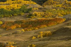 Kolory Osikowy TreesNear Wspinają się Czubatego Butte Obraz Royalty Free