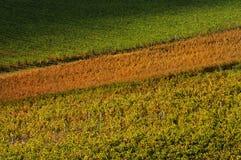 Kolory w jesieni na wineyard w Tuscany Obraz Royalty Free