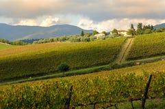 Kolory w jesieni na wineyard w Tuscany Zdjęcie Stock