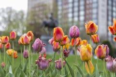 Kolory wiosna Zdjęcia Royalty Free