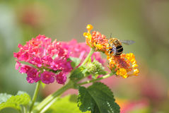 Kolory wiosna Fotografia Royalty Free