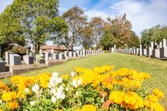 Kolossal kyrkogård Ställe i staden av Halifax i Kanada var t Royaltyfri Foto