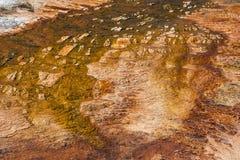 Kolossala terrasser för varm vår på den Yellowstone nationalparken Wyoming USA Royaltyfria Bilder