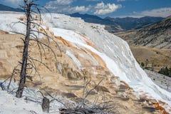 Kolossala terrasser för varm vår på den Yellowstone nationalparken Wyoming USA Arkivfoton