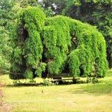 Kolossalt format träd i en parc Royaltyfria Foton