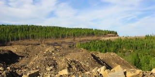 Kolremsamin i södra Yakutia Arkivfoton