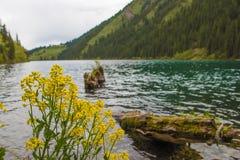 Kolsaymeer in Tien Shan-bergsysteem, Kazachstan stock fotografie