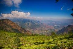 Kolukkumalai茶庄园, Munnar,印度 库存照片