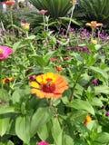 Kolumbianische Blume lizenzfreies stockfoto