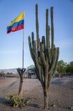Kolumbianische Flagge nahe bei einem enormen Kaktus lizenzfreie stockfotos
