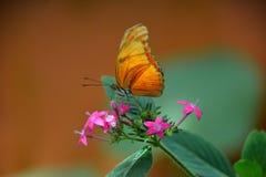 Kolumbianischer Schmetterling Tipycal Lizenzfreie Stockfotografie