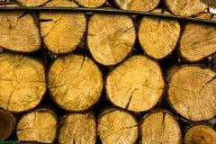Kolumbianisches Holz Stockfotos