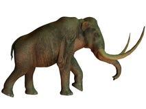 Kolumbianisches Mammut auf Weiß Stockbilder