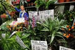 Kolumbien-Straßenblumenmarkt London, Großbritannien Lizenzfreie Stockfotos