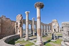 kolumn forum Morocco volubilis Obrazy Stock