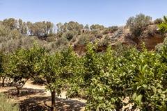 The Kolymbetra Garden at the Valle dei Templi - Agrigento, Sicily, Southern Italy. The Kolymbetra Garden at the Valle dei Templi - Agrigento, Sicily, in Southern stock photo