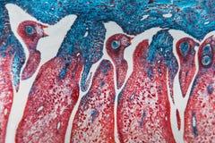 Komórka abstrakcjonistyczny kwiat Obrazy Royalty Free