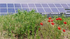 Komórka panel słoneczny maczka zieleni energetyczni pobliscy kwiaty i trawa zdjęcie wideo