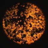 Komórki nauki abstrakta tło Obraz Royalty Free