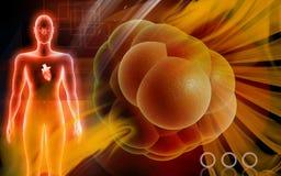 komórki serce Zdjęcia Stock