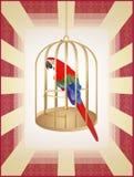 komórki złota papuga Zdjęcie Stock