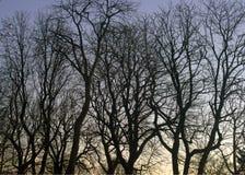 kom den övre vintern för dimmasolnedgången Arkivfoto