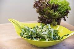 Kom gemengde salade Royalty-vrije Stock Afbeeldingen