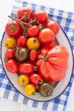 Kom met kleurrijke tomaten Stock Afbeeldingen