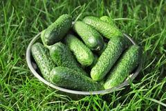 Kom met verse komkommers Royalty-vrije Stock Fotografie