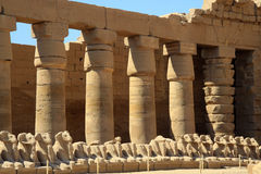 Kom Ombo double temple Ram. In Egypt Stock Images